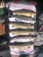 Fischereieroeffnung009